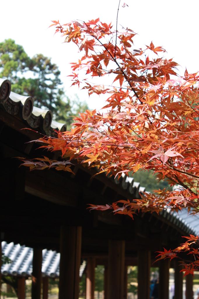 京都3 もみじ