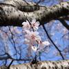春、、、来た!①