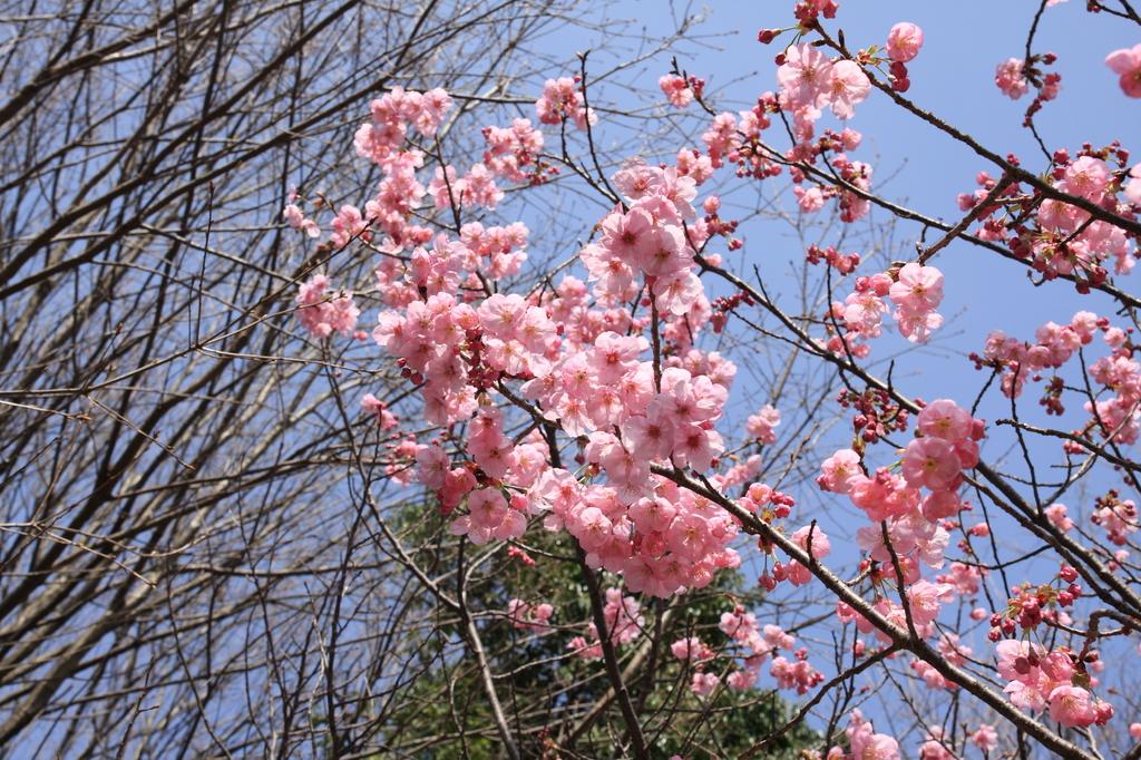 春、、、来た!②