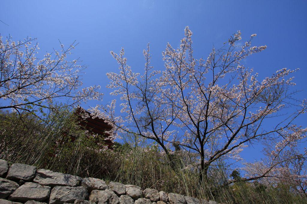 奈良・談山神社にて1