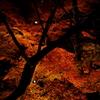 暗闇を照らす紅