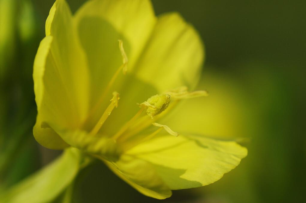 優しい黄色♪