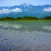 甲斐駒ケ岳の春