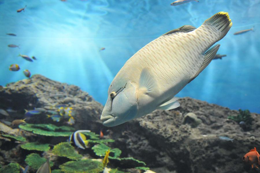 出たがり魚