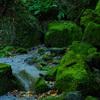深緑の世界Ⅱ