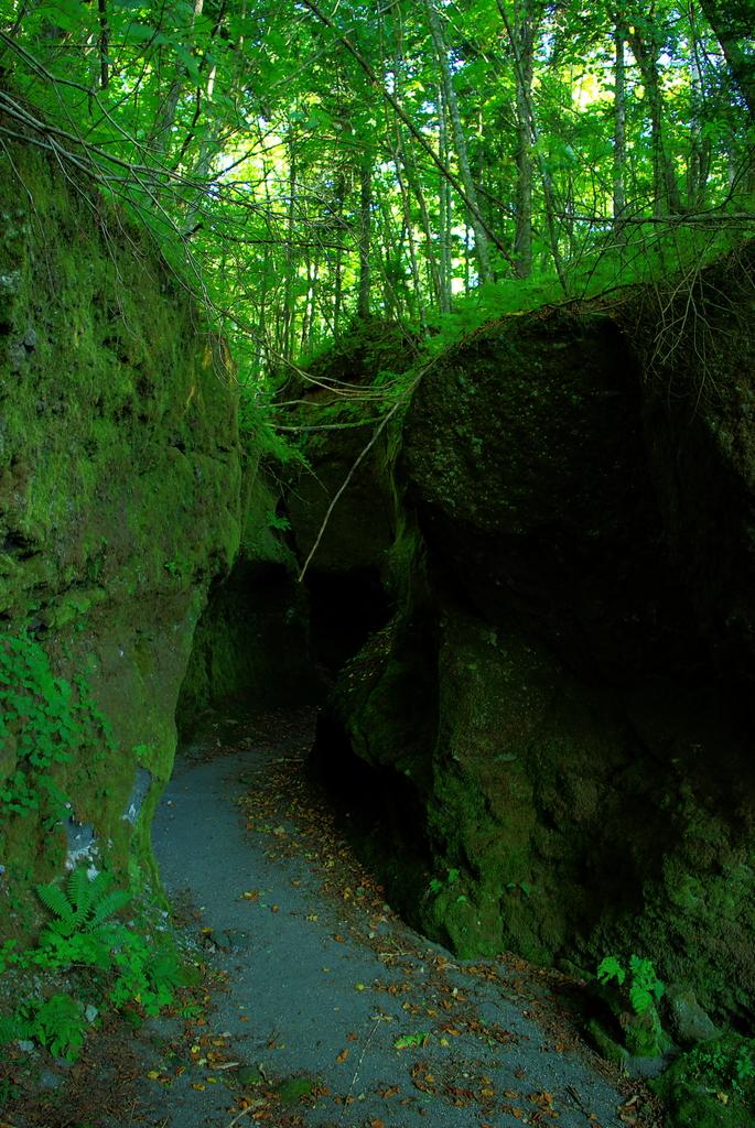 深緑の世界
