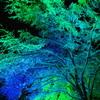 illumi tree