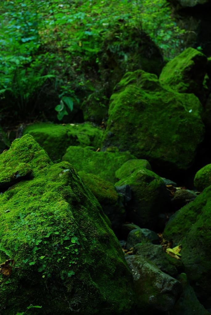深緑の世界Ⅲ
