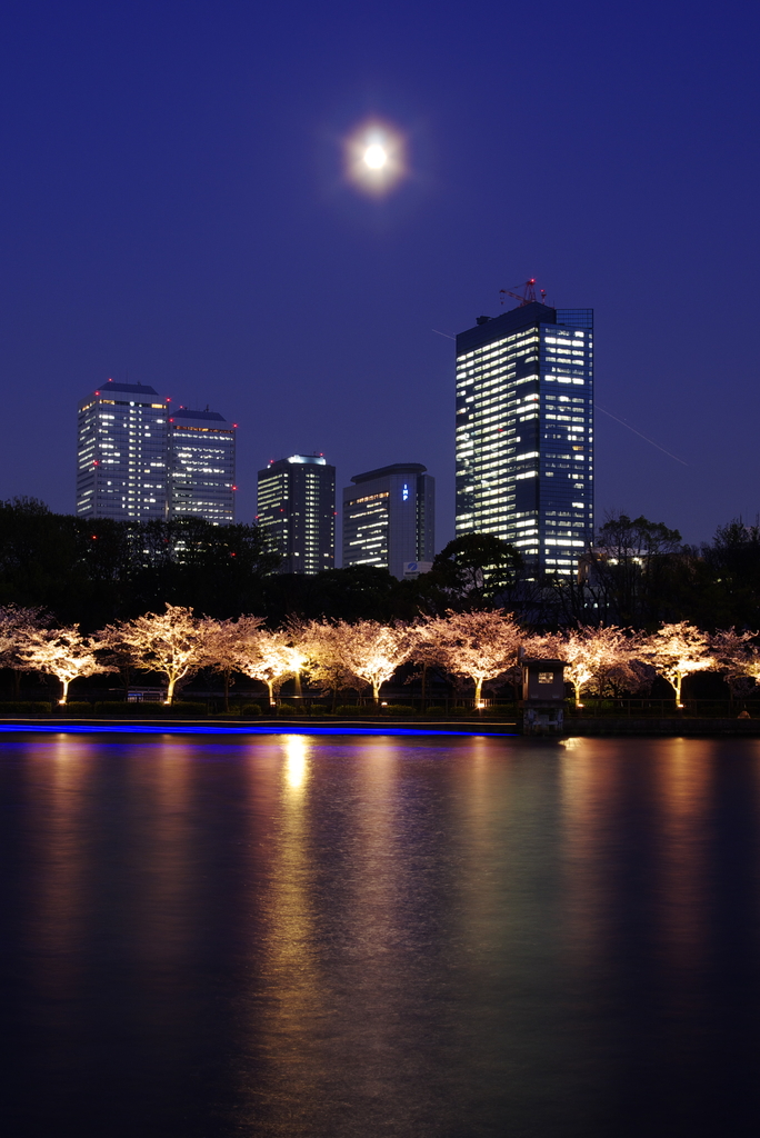 光る街、桜