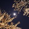 月の丸構図?