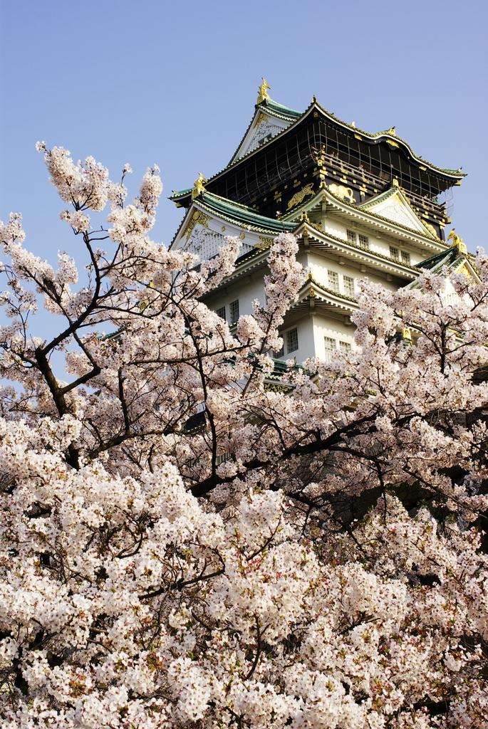 桜色に包まれて