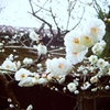 春のしらせ