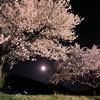 月夜の爛漫