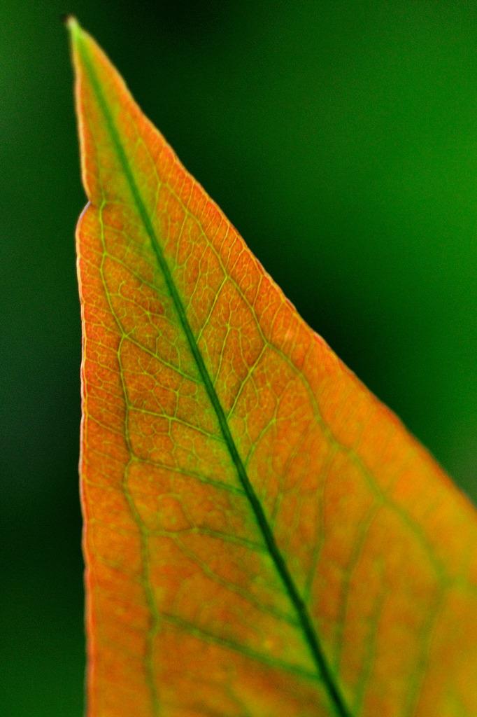 New leaf 思春期