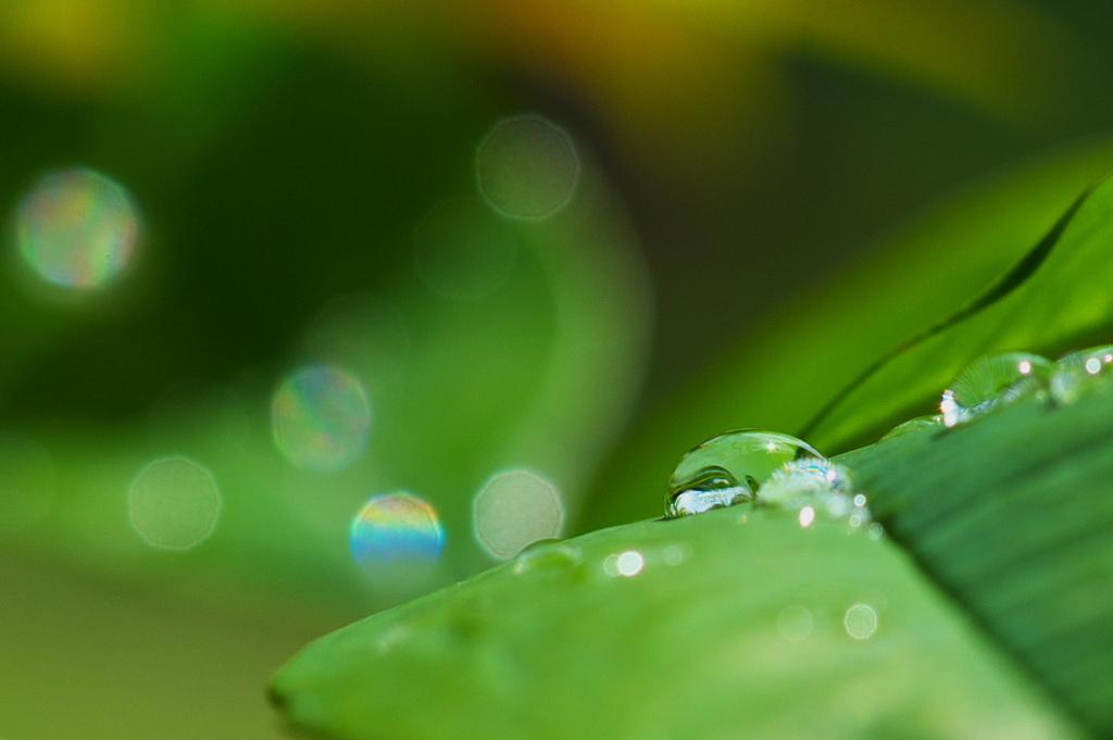 雨上がりの輝き
