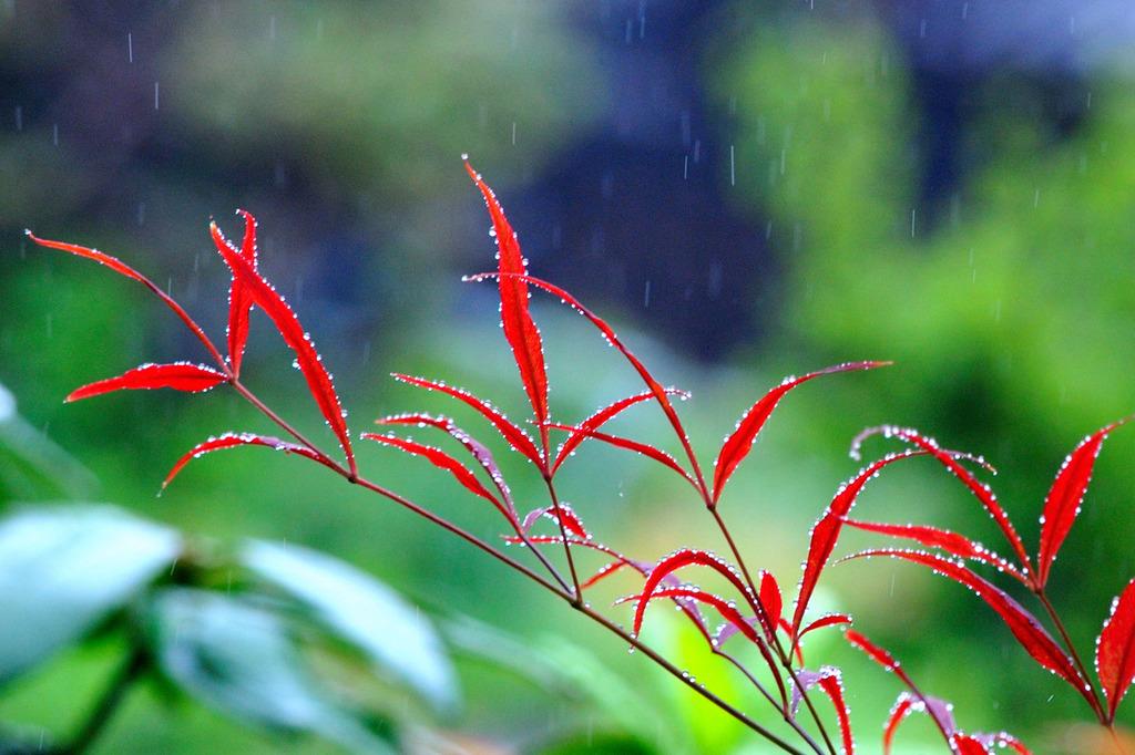 in a light rain
