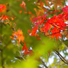 秋の色づき♪