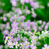 春を告げる花♪