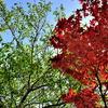 新緑&深紅