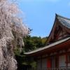 醍醐寺の春風景
