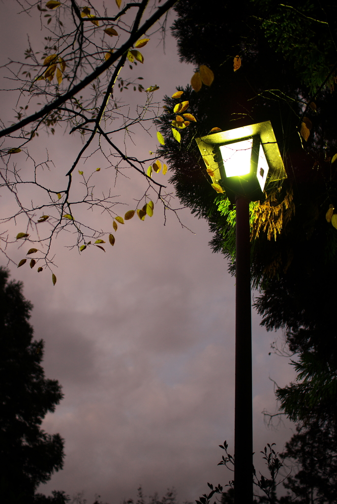 木枯らしの夕刻