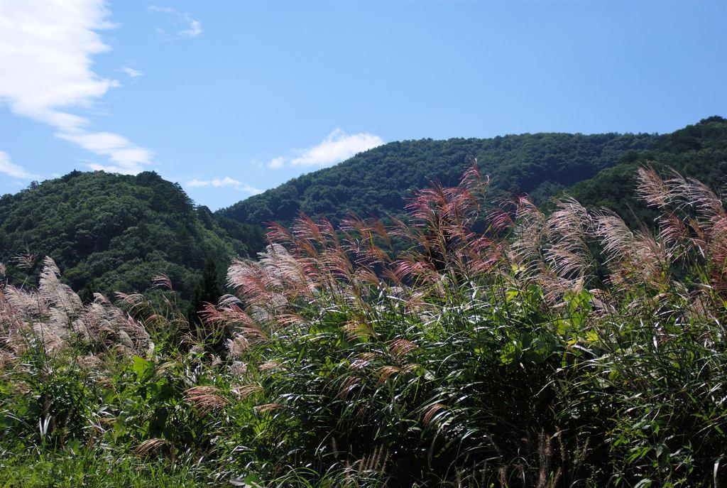 福島の秋③