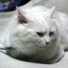 家の飼い猫 雄