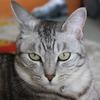 家の飼い猫 雌