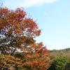 秋、見つけた!!