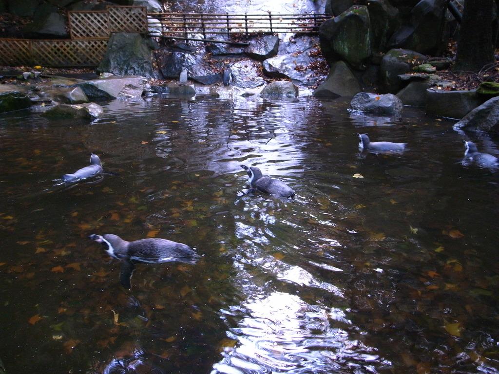 池の中のペンギン