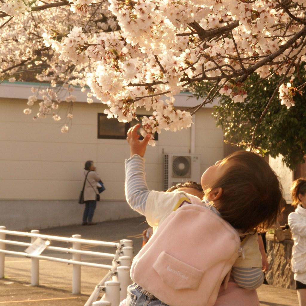 親子(春)