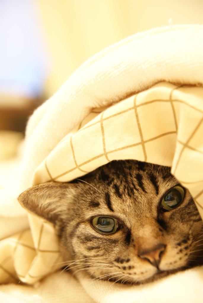寒いんです