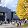 慶応義塾大学の銀杏