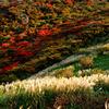 夕刻の紅葉とススキ