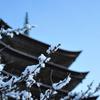 雪の瑠璃光寺