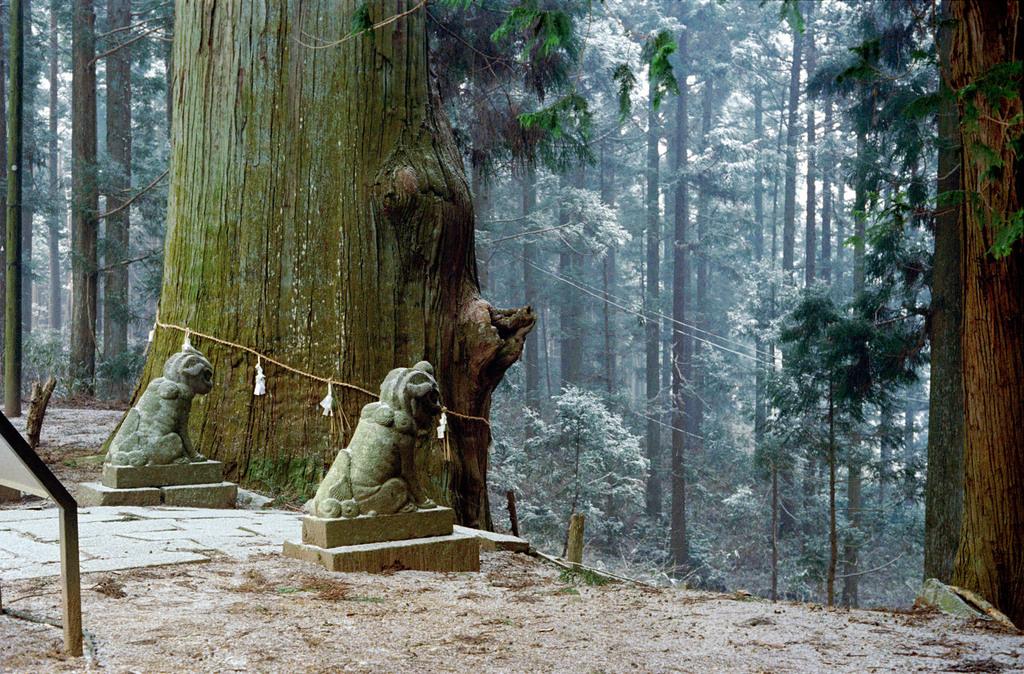 巨木と共に
