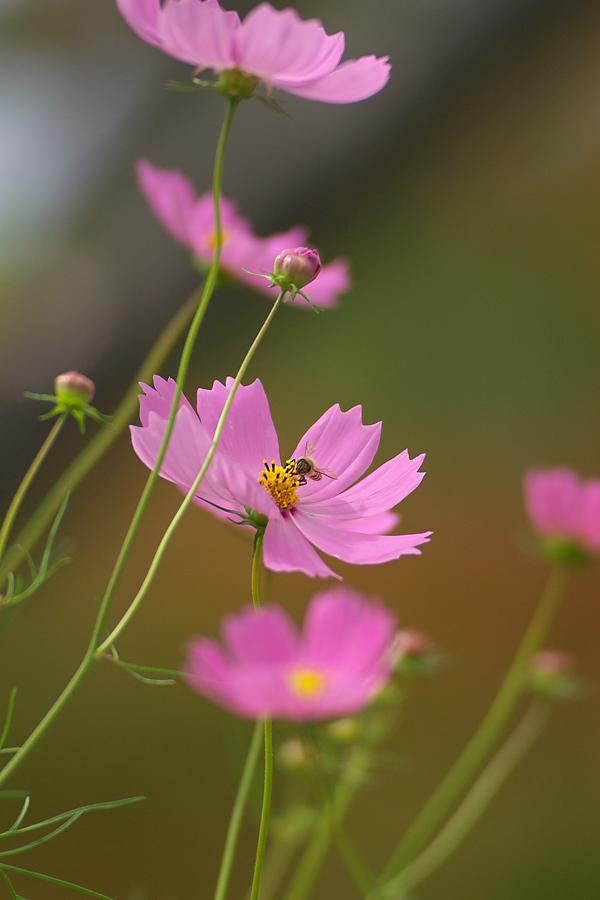 秋のミツバチ