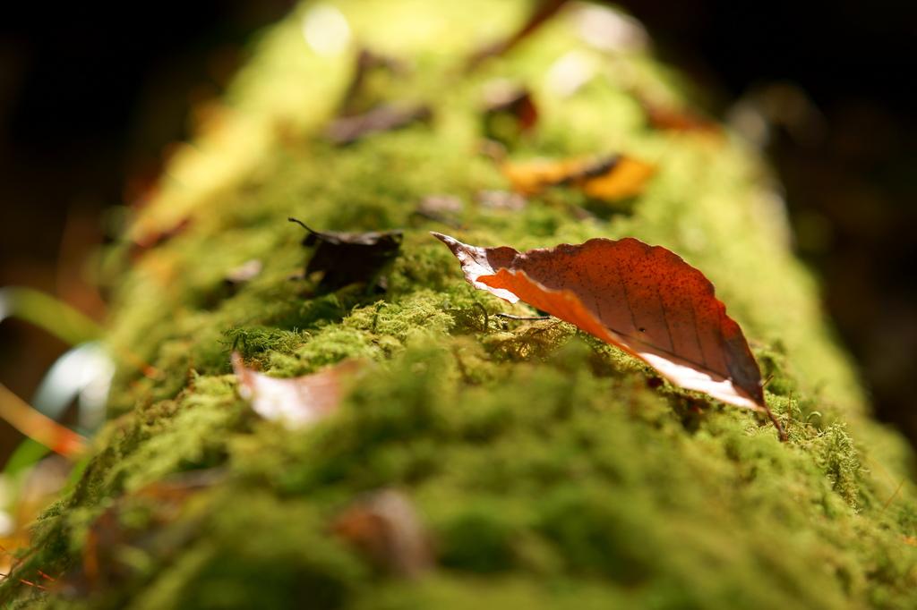 ハイキングの秋