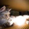 猫型の蛍光灯?!