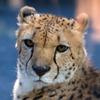 200904多摩動物公園_016