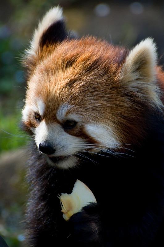 200904多摩動物公園_006