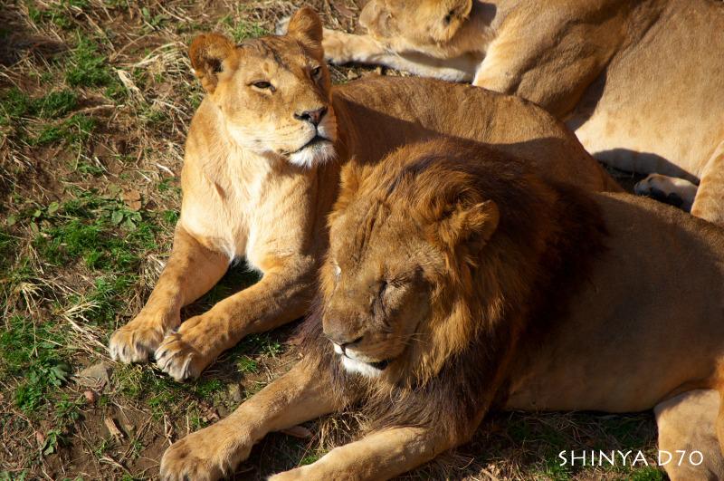 20081221D70多摩動物公園015