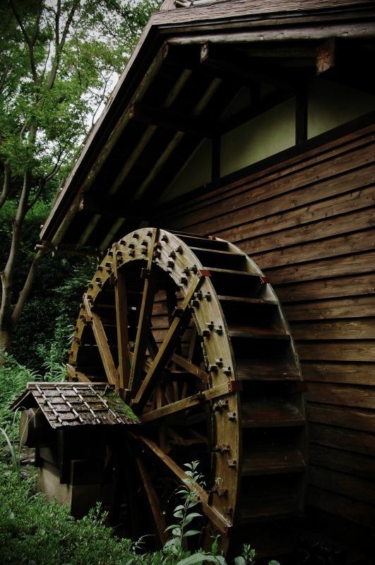 20080818郷土の森068