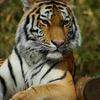 20090110多摩動物公園104