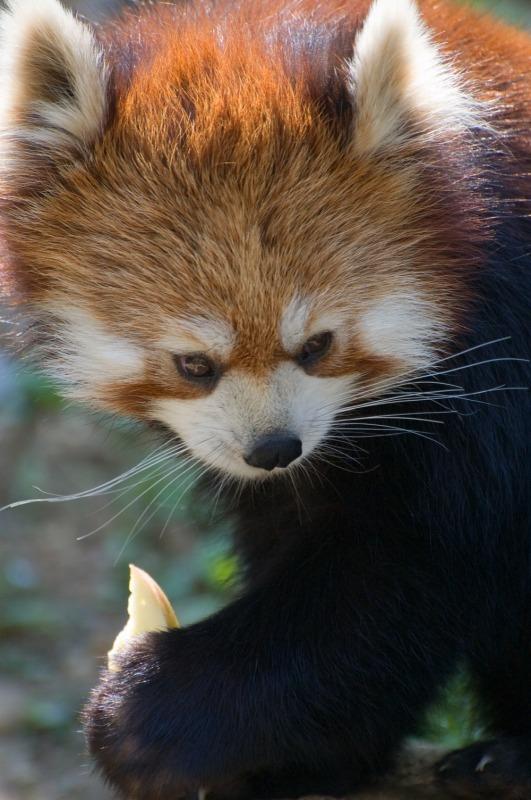 200904多摩動物公園_008