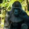 090214上野動物園007