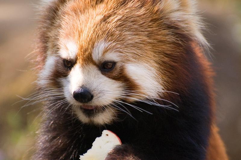 200904多摩動物公園_005