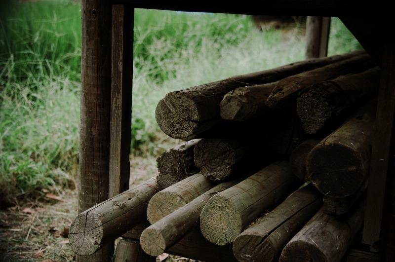 20080818郷土の森075