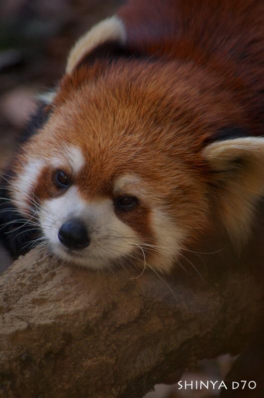 20081221D70多摩動物公園094