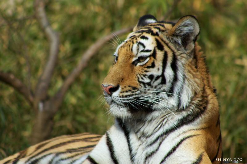 20090110多摩動物公園099